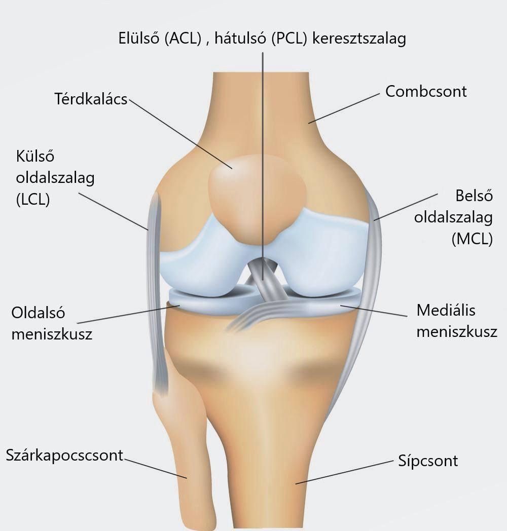 meniszcus térdkárosodás tünetei