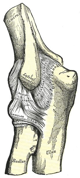 ízületi és izomfájdalom vérszegénység a ízület fáj a kocogás után