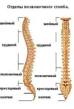A parti-keresztirányú ízületek deformáló artrózisa