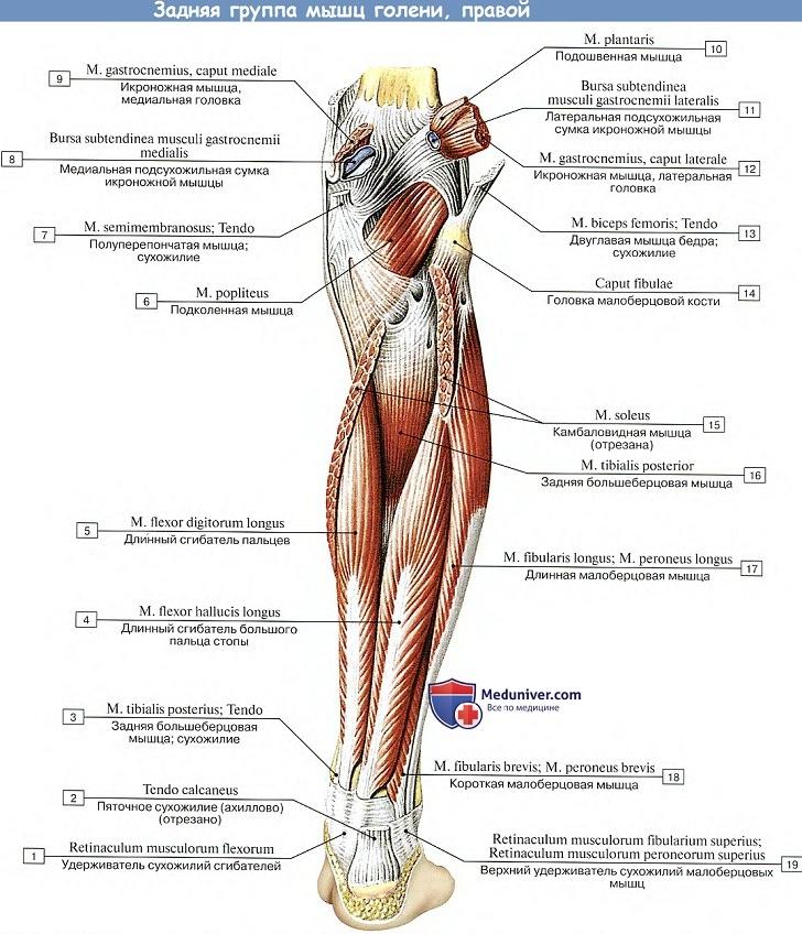 A lábpárnák ízületei fájnak. A lábfej- és talpfájdalmak okai