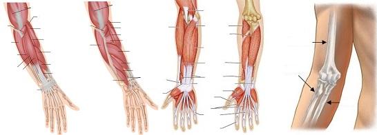 Fáj a jobb kéz középső ujján lévő ízület. Duzzadt, fájdalmas ujjak - Az orvos válaszol